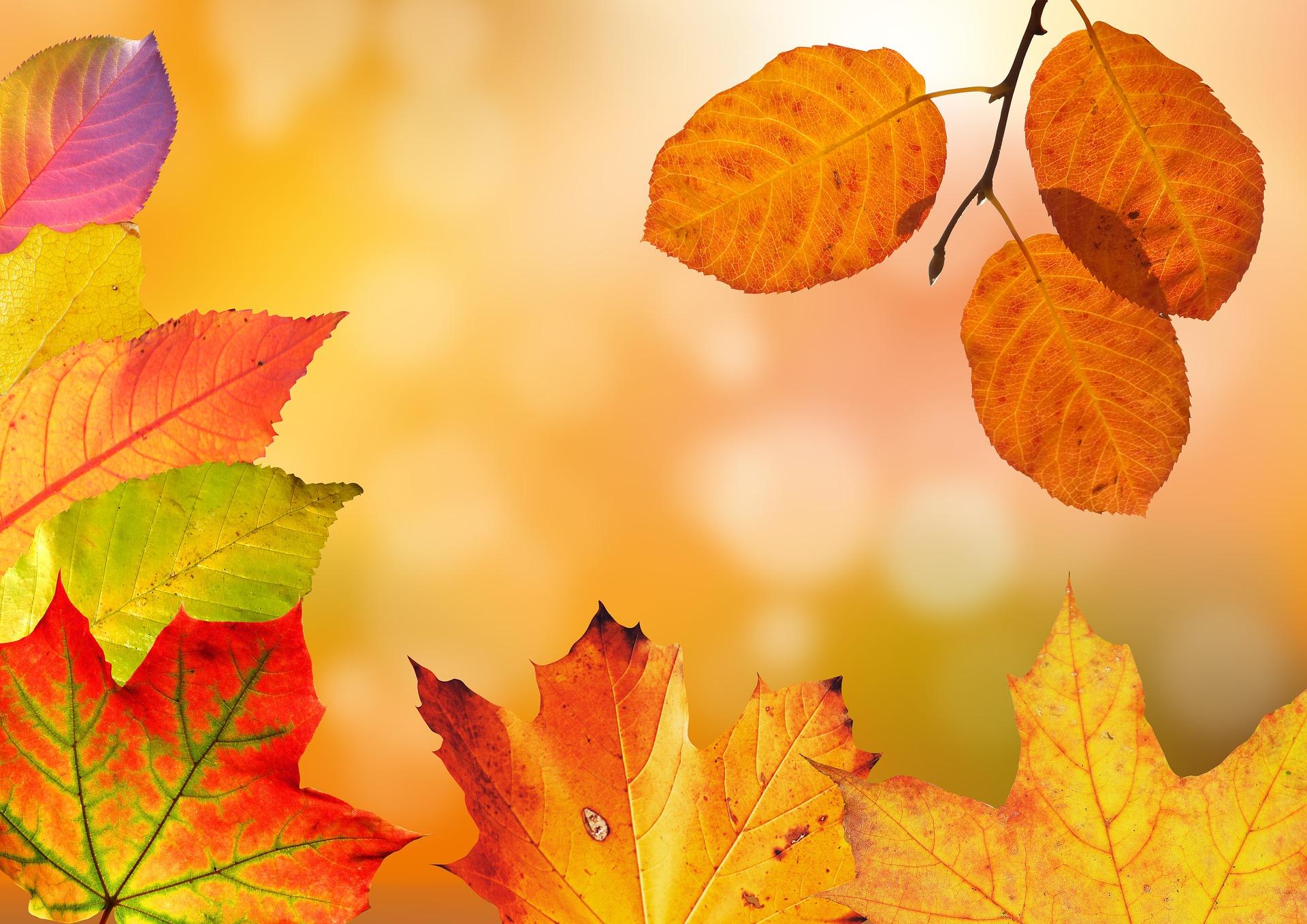 Foliage in Nord America